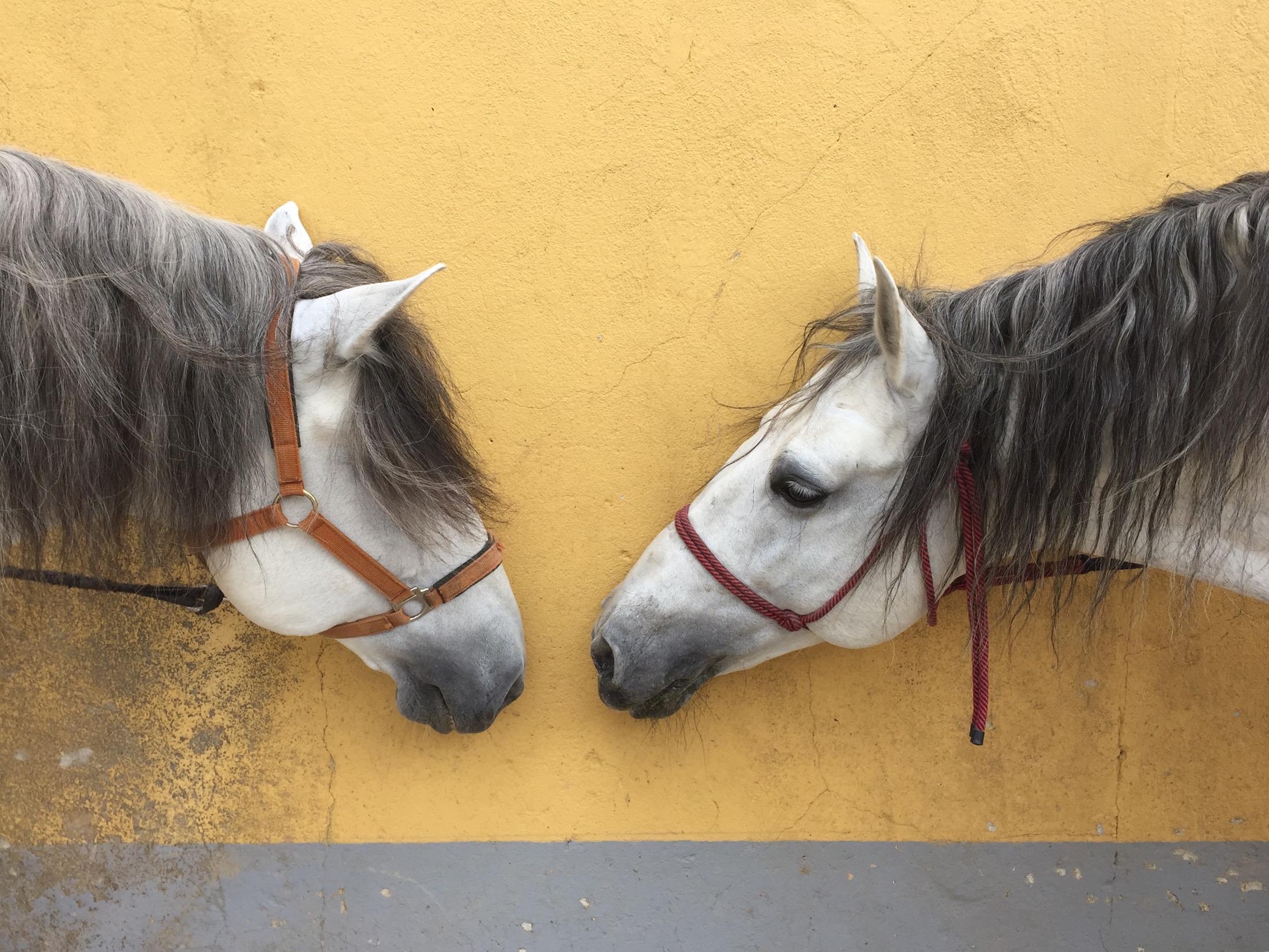 Uli and Xibi